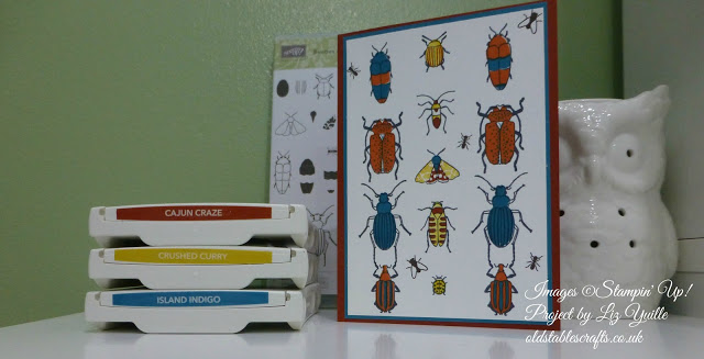 Beetles and Bugs EVERYWHERE!