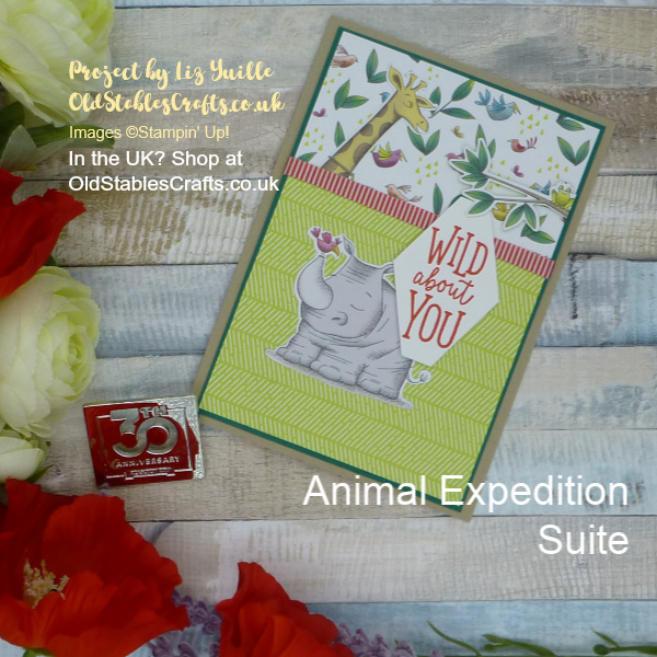 Animal Expedition Suite Card