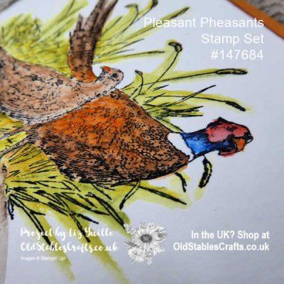 Pleasant Pheasant Easy Watercolour