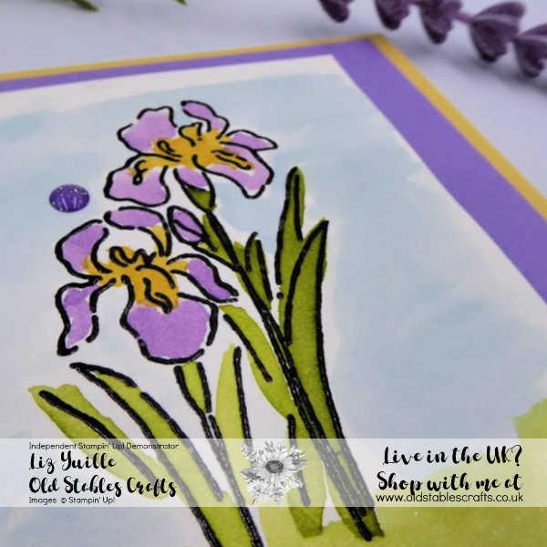 Inspiring Iris #SSS Avid Highland Heather and So Saffron