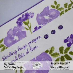Inspiring Iris Border Purples