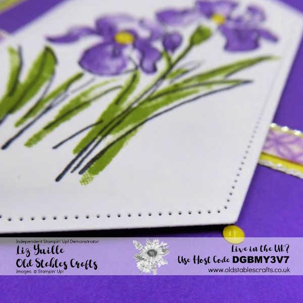 Inspiring Iris Spring
